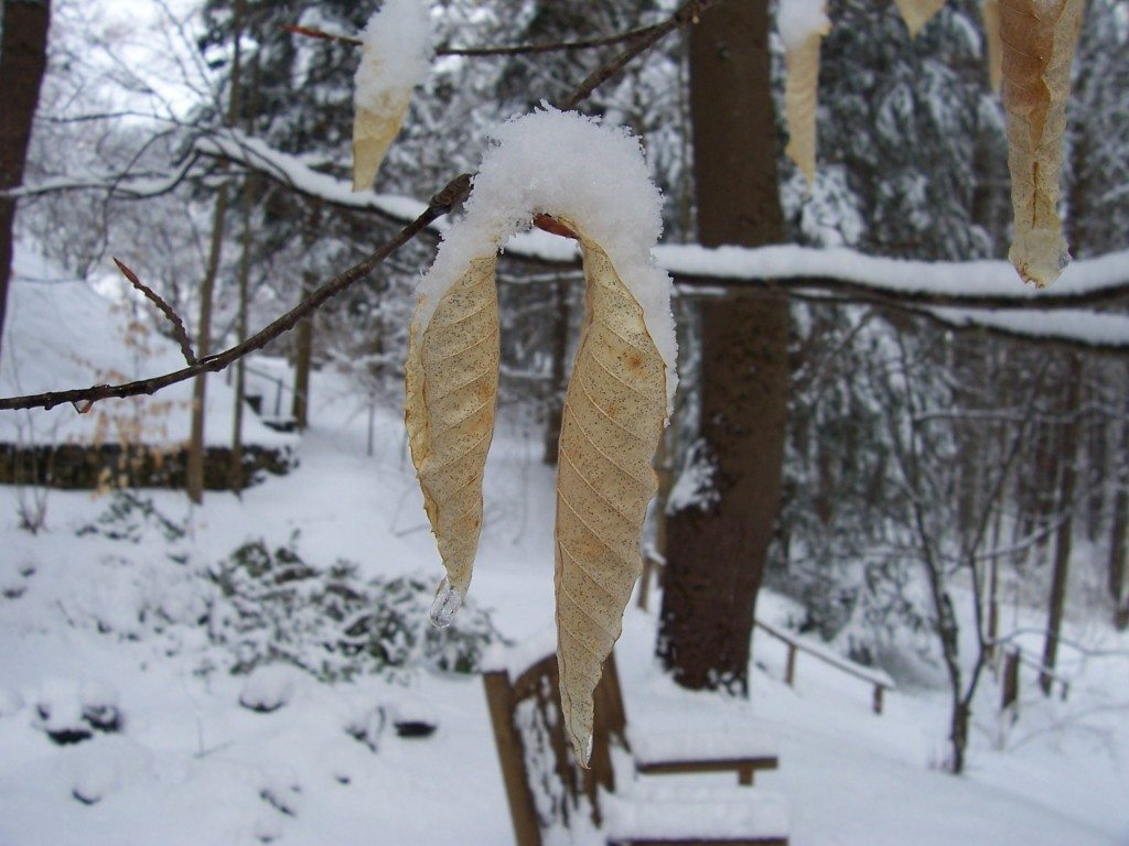 Snow in New England can come as late as April (photo from April 5, 2007). This ReveDreams post is all about crafts that require cold and/or snow.